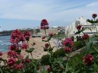 Biarritz (Foto Hedi Grager)