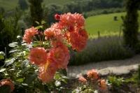 Der Garten von Renate Polz (Foto Polz-Garten)