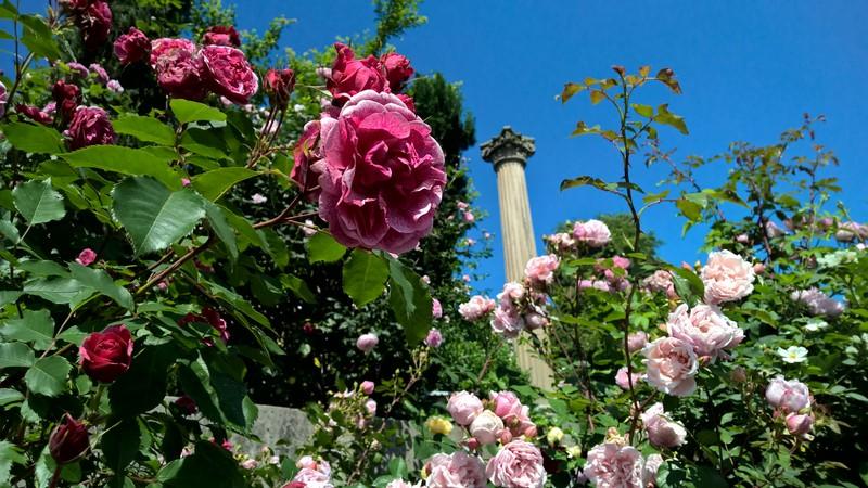 Renate Polz holt sich nicht nur ihre Kräuter aus ihrem eigenen Garten, hier in dieser Idylle tankt sie auch Kraft (Foto Hedi Grager)