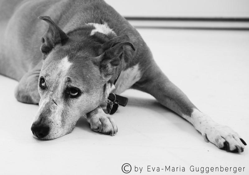 Annika Petersons treue Begleiterin Lucy (Foto Eva Maria Guggenberger)