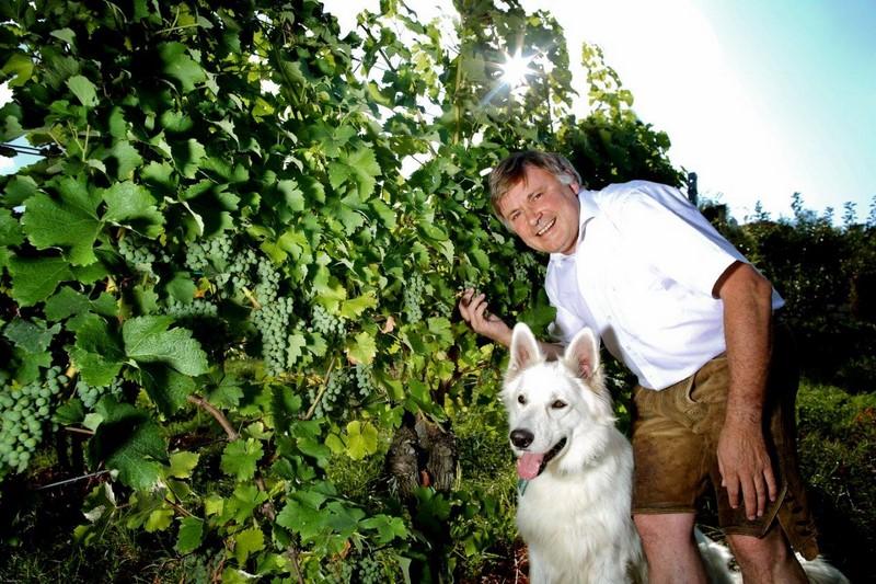 Walter Polz mit seinem weißen Schäferhund Jet in seinem Weingarten (Foto Johannes Kernmayer)