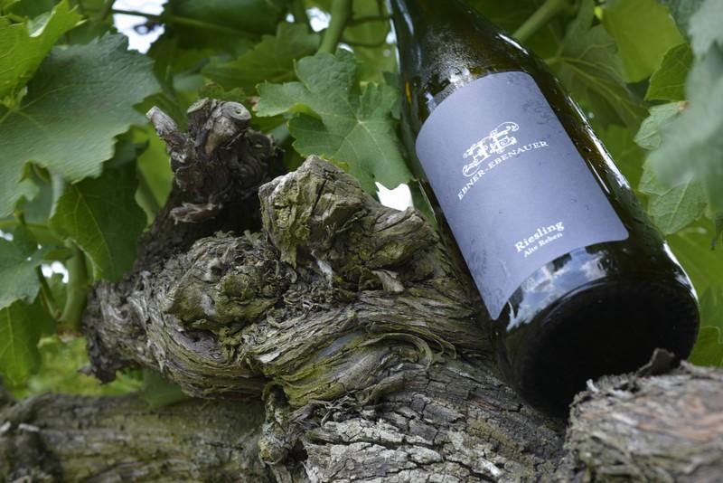 Fünfzehn Hektar Rebfläche bewirtschaften Marion und Manfred Ebner-Ebenauer, ihr größter Schatz sind die Weingärten mit ihren 30 bis 70 Jahre alten, extrem tiefwurzelnden Rebstöcken (Foto Steve Haider)