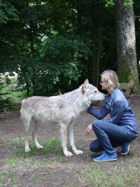 Es war ein unglaubliches Gefühl, den Wolf zu streicheln (Foto Manfred Staniek)