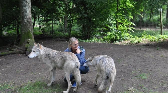 Ein Wolf gibt mir seine Pfote
