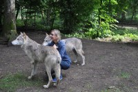 Besuch bei den Wölfen im Wolf Science Center (Foto Reinhard Sudy)