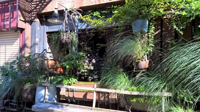Hinter vielen grünen Pflanzen verbirgt sich der Eingang zu Edi & The Wolf (Foto Grager)