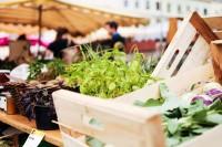 Buch WE ARE VIENNA: Der Wiener Karmelitermarkt als Hotspot