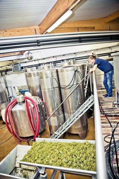 Das südsteirische Weingut Muster.gamlitz (Foto Weingut MUSTER.gamlitz)