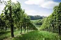 Weingut Muster Gamlitz (Foto Weingut MUSTER.gamlitz)