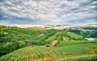 Blick von der Ried Hochsteinriegl Weingut Wohlmuth (Foto Weingut Wohlmuth)