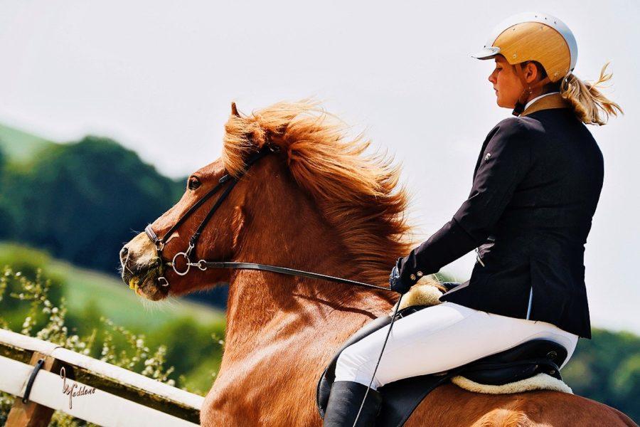 """Gwendolin Szyszkowitz-Schwingel auf Thori vom Panoramahof: """"Ich reite seit 30 Jahren Islandpferde. Das ist für mich die beste Pferderasse."""" (Foto Ulrich Neddens)"""