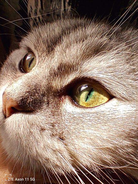 TZE Axon 11 5G: Der Makro-Modus lässt fotografierte Elemente, beispielsweise das Gesicht einer Katze, gestochen scharf erscheinen. (Foto TZE)