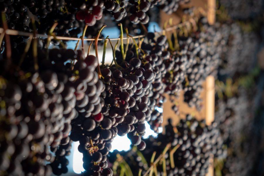 Zuoberst steht bei den Süßweinen der 2017er Blaue Wildbacher Schnürlwein des renommierten Schilcher-spezialisten Jöbstl aus Wernersdorf in der Weststeiermark. (Foto Florian Jöbstl)